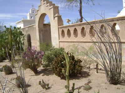 Mission cactus garden